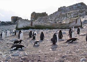 Отдых в Аргентине. Антарктика