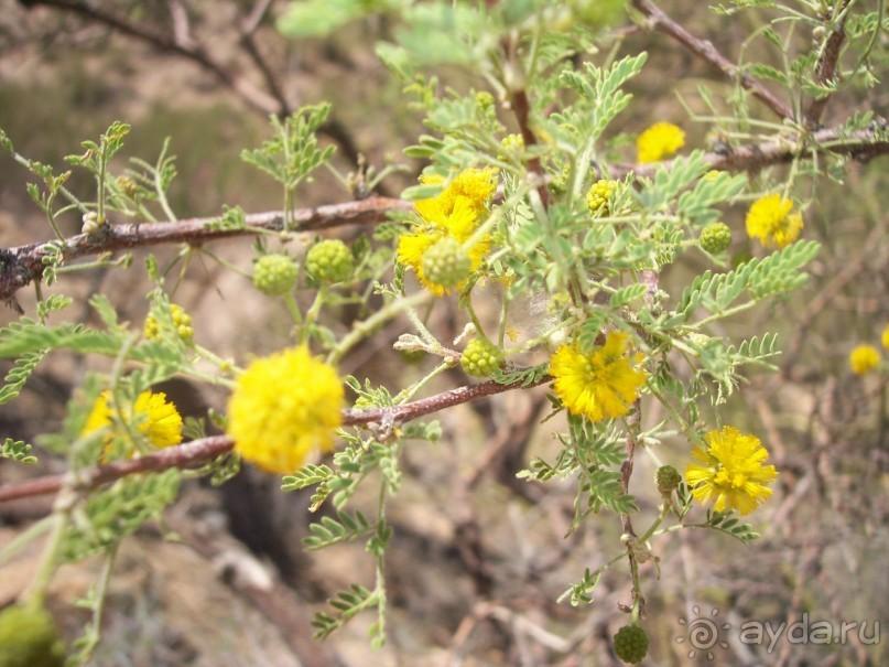 Национальный парк Сагуаро. Кактусы, только кактусы