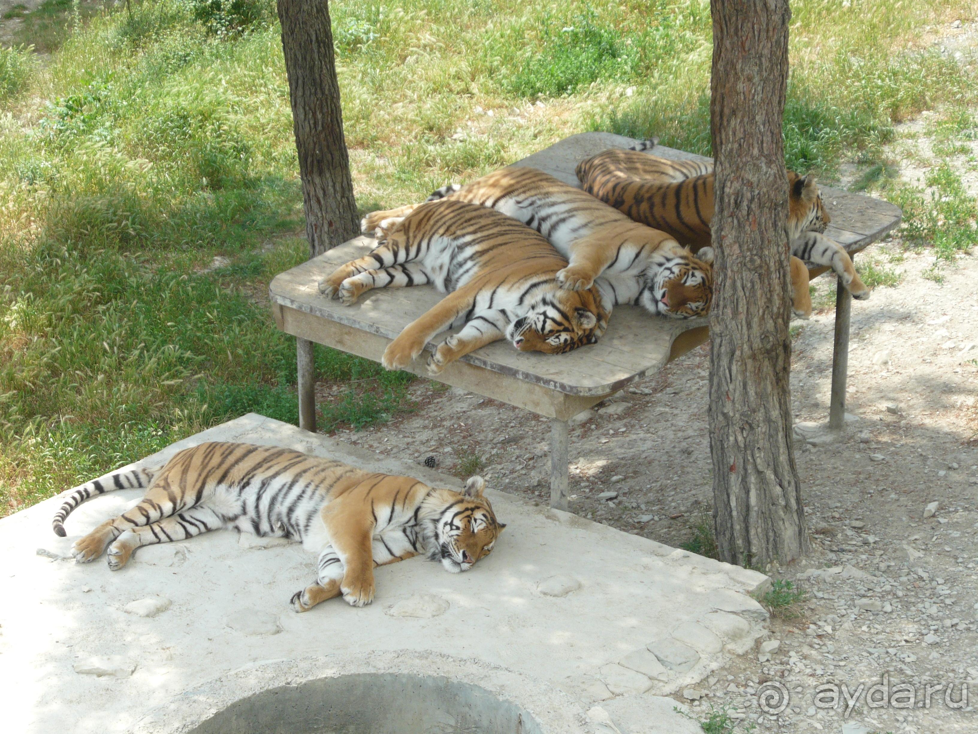 Сафари-парк - реабилитационный центр для животных в