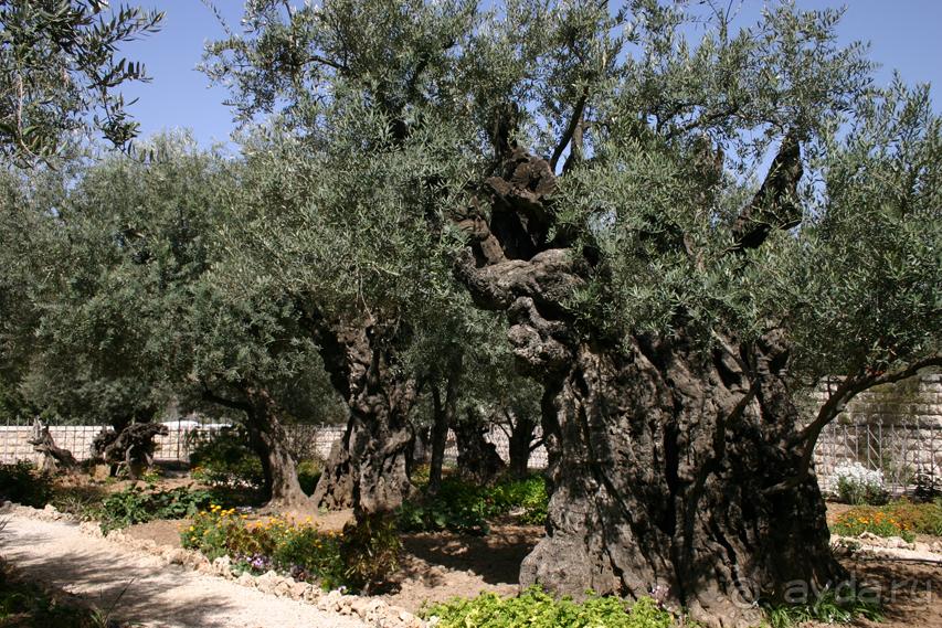 14 мест которые нужно посетить в Израиле Skyscanner